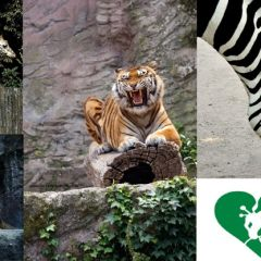 Il Bioparco – Giardino Zoologico