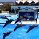 Zoomarine - L'isola dei Delfini