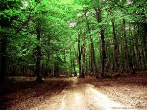 Il Parco Regionale Monti Simbruini - Subiaco